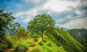 Little Adam's Peak and Ella Rock