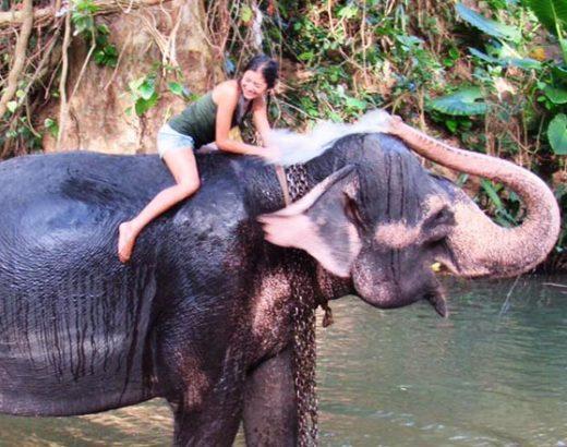 Millennium Elephant Foundation
