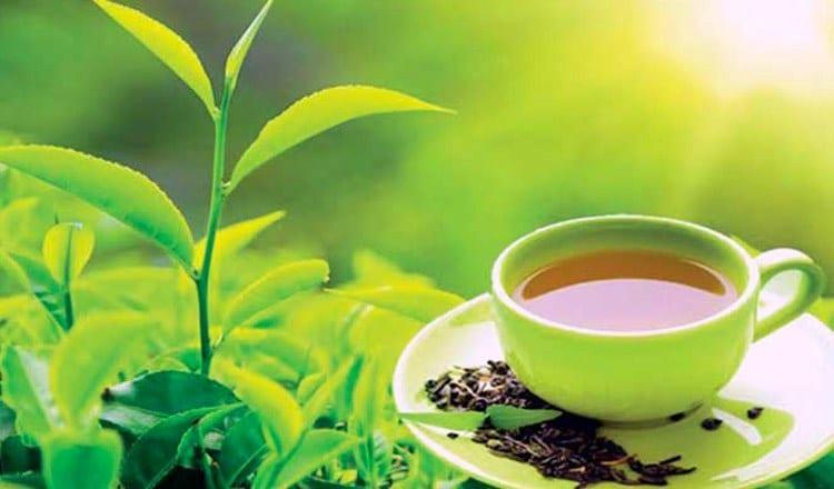 The World Famous Ceylon Tea in Sri Lanka