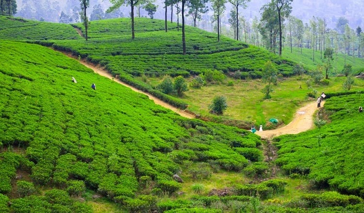 Travel Places in the Hill Country Sri Lanka
