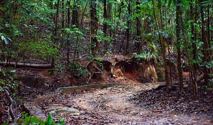 Udawattekele Sanctuary Kandy Sri Lanka